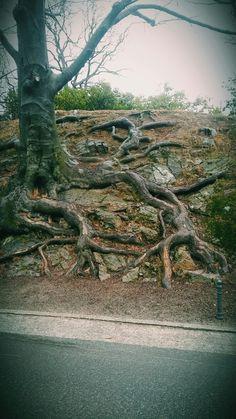 #książ#ferie2018#tree
