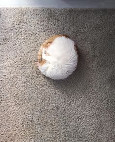 An almost perfect fur circle. by HadHerses. What you think about?