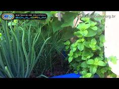 Aquaponia: produção integrada de peixes e hortaliças - YouTube