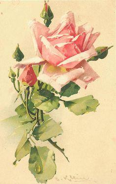 Klein Roses