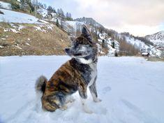 #snow #puppy #naokoakitainu #dog #paws #chien #mountain #dogsthahike #pawsfriend #akitainu #akita #akitainudogs #akitainudog #akitainucute #japaneseakitainu #akitadogs #akitasofinstagram #akitapuppy #akitaworld #akitalovers #akitalife #akitapics  #akita_inu #animal #animals #dogs #cute #doglover #akitacutepuppy #dog_features Akita Puppies, Cute Puppies, Japanese Akita, Naoko, Dog Paws, Inu, Dog Lovers, Husky, To Go