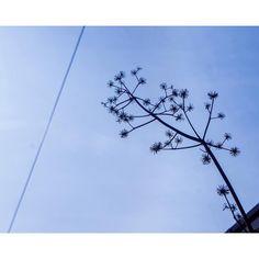 2016  . . . . #winter #sky #skyporn #landscape #겨울