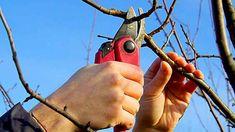 obrázek z archivu ireceptar.cz Tree Pruning, Pruning Shears, Garden Tools, Gardening, Plant, Garten, Yard Tools, Outdoor Power Equipment