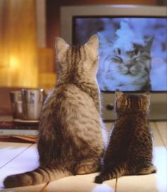 Kitties watching a cat on tv Cute Cats And Kittens, I Love Cats, Crazy Cats, Cool Cats, Kittens Cutest, Baby Animals, Funny Animals, Cute Animals, Pretty Cats