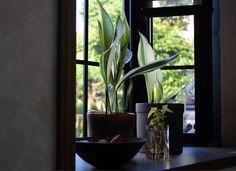 Cast Iron Plant Inside Plants, Cool Plants, Indoor Garden, Indoor Plants, Cast Iron Plant, Bathroom Plants, Bathroom Ideas, Interior Design Magazine, Garden Spaces
