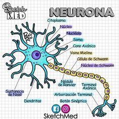 Study Biology, Biology Lessons, Medicine Notes, Medicine Student, Nursing School Notes, Ob Nursing, Nursing Schools, Science Notes, Medical Anatomy