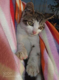 Kitty by naziadi via http://ift.tt/1K1rzOk