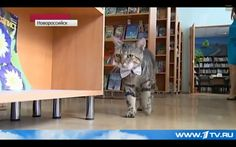 Not only does he know that bow ties are cool, but he's currently officially employed as an assistant librarian at the Novorossiysk Library. | Oh My God, There's A Cat In Russia That Wears A Bow Tie And Works As A Librarian
