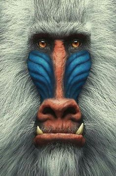 Portrait Close-up Mandrill - Baboon - Monkey Primates, Mammals, Rare Animals, Animals And Pets, Wild Animals, Angry Animals, Beautiful Creatures, Animals Beautiful, Animals Amazing