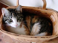 A basketful of Daisy...resting in the egg basket.