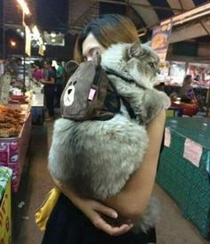 I actually hv the same cat backpack. My cat hate it so much to wear it to bring her own snacks. Cute Baby Animals, Animals And Pets, Funny Animals, Cute Kittens, Cats And Kittens, Crazy Cat Lady, Crazy Cats, I Love Cats, Cool Cats