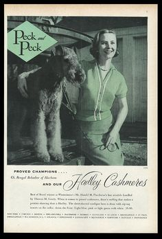 1955 Airedale Terrier Champion Dog Photo Peck Peck Women's Sweaters Print Ad | eBay Welsh Terrier, Wire Fox Terrier, Airedale Terrier, Terriers, Best Puppies, Best Dogs, Dog Photos, Dog Pictures, Large Dog Breeds