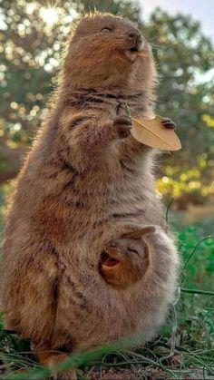 Funny Animal Videos, Cute Funny Animals, Cute Baby Animals, Baby Animals Pictures, Cute Animal Pictures, Nature Animals, Animals And Pets, Animal Kingdom, Image Zen