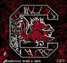 Go Gamecocks ! South Carolina Gamecocks Football, Gamecock Nation, Go Gamecocks, College Football Teams, African Quotes, Rock, Business, Amazing, Sports