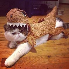Cat-rex (I thought they were extinct?)
