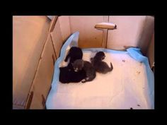2 day old kittens with mama Kittens, Cats, Nova, Youtube, Pictures, Animals, Gatos, Photos, Animales