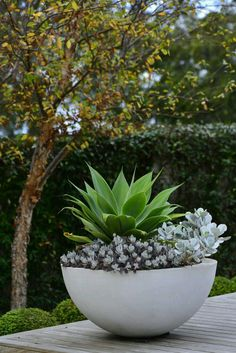 Summer style!! GREEN and WHITE and GRAY! Large white modern contemporary round planter pot filled with succulents and drought tolerant plants! Great style that works during the heat of the summer months!