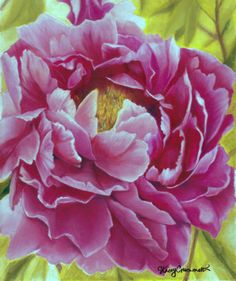 "Drawing by Stacey Crummett ""Pam's Peony"""