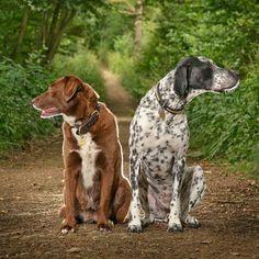 Pretty dogs friends