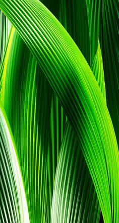 Fundos verdes · the 1 rated i just shared! Iphone Wallpaper Green, Vs Pink Wallpaper, Aztec Wallpaper, Wallpaper Backgrounds, Iphone Backgrounds, Screen Wallpaper, Wallpaper Quotes, Leaves Wallpaper, Ios 7 Wallpapers