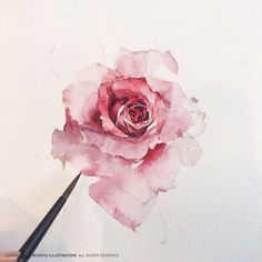 Beautiful loose watercolor rose!