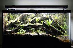 ... Dart frog on Pinterest | Vivarium, Tropical terrariums and Poison dart 10 Gallon Dart Frog Vivarium