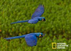 Entre em um secreto e remoto mundo no coração da América do Sul. Brasil Secreto, Pantanal. #NatGeo Confira conteúdo exclusivo no www.foxplay.com