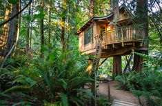 Treehouse Point in Fall City Washington - how have I never heard of this?! Who needs a hotel when you can have a tree house?