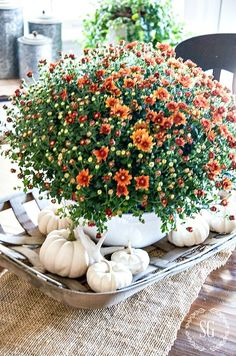 Best way to celebrate fall's glory is to create some beautiful fall decor ideas with featuring wreaths, pumpkins and other great autumn home decorations. Autumn Nature, Autumn Home, Autumn Decorating, Budget Decorating, Decorating Games, Deco Floral, White Pumpkins, Mums And Pumpkins, Fall Table