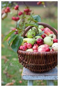 An Apples (jabłka) .an apple (jabłko) Apple Harvest, Harvest Time, Bountiful Harvest, Fruits Decoration, Apple Orchard, Apple Farm, Down On The Farm, Apple Tree, Fruits And Vegetables