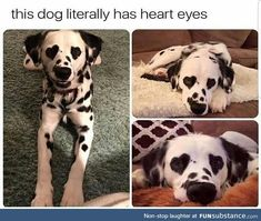 Animal Pictures Memes that will Make You Smile - 3 Funny Animal Jokes, Funny Dog Memes, Cute Funny Animals, Funny Cute, Funny Dogs, Funny Husky, 9gag Funny, Funny Captions, Animal Humor