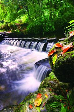 Tollymore Forest Park, County Down, Ireland