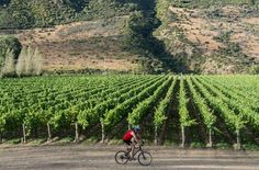 QA with Alan Brady Winemaker Queenstown NZ Queenstown New Zealand, Fields, Vineyard, Cycling, Tours, Free, Wallpapers, Outdoor, Bicycling