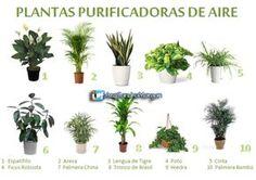 5 consejos para escoger plantas de interior para tu oficina.   arQ. Sandra Morgan