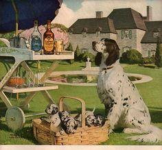 vintage english setter puppies 1952 advertisement calvert whiskey