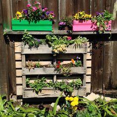 Garden flower pallet -recycle - repurpose murphyfrog Susan's garden blooms container garden