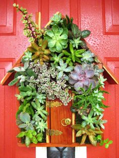 """Succulent Living House """"Green Home"""" Hang or Stand Centerpiece Perfect Unique Gift and Home Decor"""