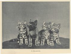 Four adorable kittens, 1942
