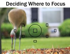 Deciding Where To Focus | Boost Your PhotographyTaking control of your focus points will make an immediate impact in your photography.