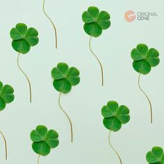 """""""May your blessings outnumber the shamrocks that grow. And may trouble avoid you wherever you go. Beautiful Songs, How Beautiful, Celtic Symbols And Meanings, Home Dna Test, Celtic Knot Jewelry, Story Drawing, Evil Demons, How To Grow Taller, Beautiful Children"""