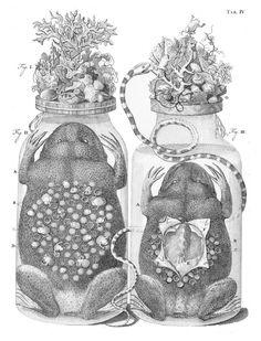 """One of Ruysch's """"embalming jars"""", from his Thesaurus animalium primus (1710)"""