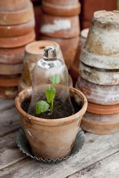 I just love the look of old/used pots