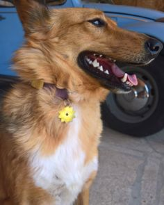 Flower ID Tag Adding a fun side to identifying your pet :D In every ID tag we add your contact and your pet's name