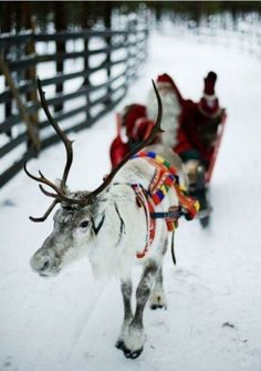 Santa & reindeer If you love reindeer take a look at Luxlyk Reindeer Hire at www.luxlykreindeer.co.uk