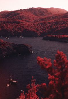 Hues of Burgundy and Bordeaux Burgundy Aesthetic, Color Bordo, Nature Photography, Photography Ideas, Photography Aesthetic, Travel Photography, Beautiful Places, Scenery, World