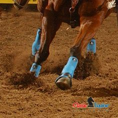 Turquoise Classic Equine boots for my Johnny boy :)