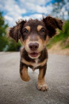 #dog #puppy #cute animals adorable animals @ http://funnyanimalstuff.com