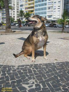 https://flic.kr/p/TcVNPo | Kika | Kika é uma cadelinha muito dócil que está sempre pela praia de Copacabana. Rio de Janeiro