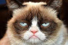 Grumpy Cat was born on April 4, 2012 and is only 2 years old.