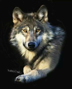 Wolf Photos, Wolf Pictures, Beautiful Wolves, Animals Beautiful, Animals And Pets, Cute Animals, Wolf Husky, Wolf Artwork, Wolf Painting